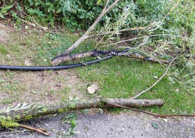 Brandeinsatz-Stromleitung-Baum (4)