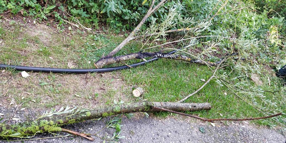 Brand_ Baum über Stromleitung
