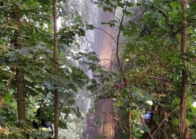 Brandeinsatz-Stromleitung-Baum (5)
